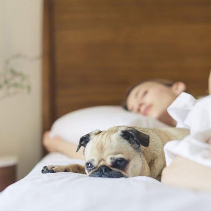 O seu quarto pode ser grande responsável pela sua insônia